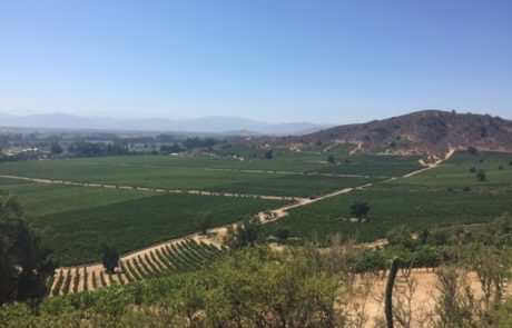 El Olivar Vineyard