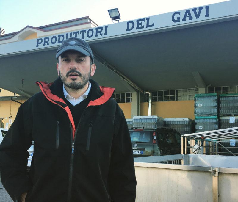 Produttori del Gavi