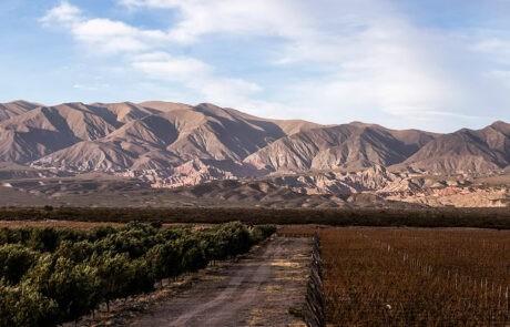 Estancia Los Cardones Vineyards