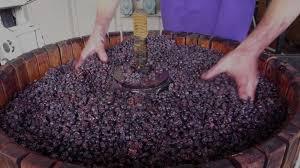 Brandborg Vineyard & Winery