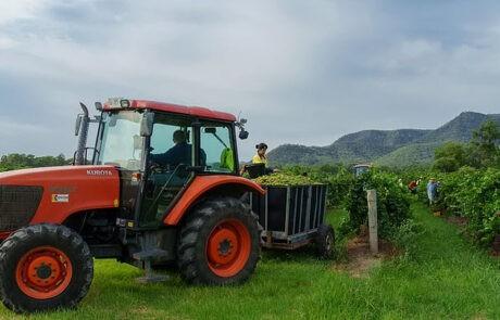 Leogate Estate Wines
