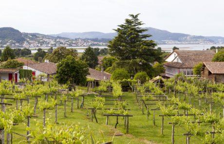 Santiago Ruiz's original vines